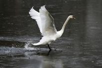 Bird flu deaths: Gwalior Zoo shut down after 15 painted storks die in one week; Delhi's Deer Park also closed