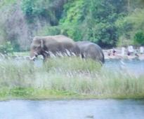 Wild elephants stray into Ottappalam