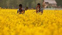 GM Mustard row: Experts weigh in on both sides of the genetically modified foods debate