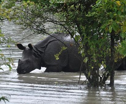 Kaziranga loses 117 animals in week-long flood