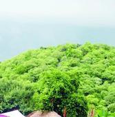 Proposal for Mangar Bani forest demarcation