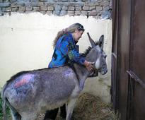 Eat, Bray, Suffer: An Egyptian donkey's tale