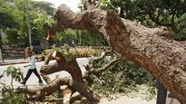 Tree uprooted in Malabar Hill, 3 injured