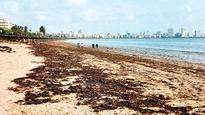 Why the sand at Mumbai's famous Girgaum chowpatty is turning black