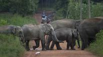 Animal rights group demands probe into deaths of jumbos
