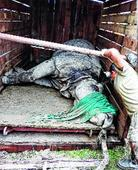 Doctors tranquillise stray rhino in Sonitpur