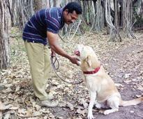 Forest officials want Kichu to continue in dog squad