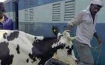 Odisha: Cow vigilantes thrash cattle traders for transporting cows