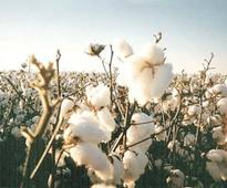 Pakistan spends $4b a year on cotton imports