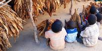 Enforcement Hampering Child Labour Elimination In Malawi