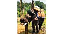 First experiment to domesticate and train wild elephants in Maharashtra nears completion
