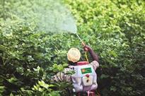 India may set up huge fertiliser plant in phosphate-rich Algeria