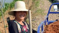 China: how have farmers benefited from the World Bank Integrated Modern Agriculture Development Project?