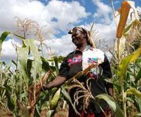 C-MRF launched by COMESA to improve grain trade