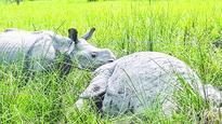 Rhino death jolt to conservation effort