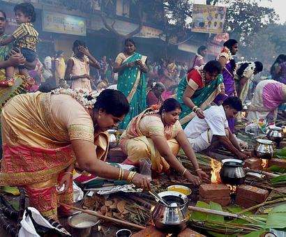 Tamil Nadu celebrates Pongal; Jallikattu ban plays spoilsport