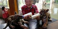 Zoo owner Manny Tiangco bottle feeds Bengal tiger cubs which he named Duterte and Leni
