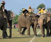 Mammoth battles at elephant polo championship in Nepal