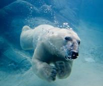 Global brands say no to Arctic fishing