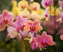 Ways To Grow Orchid Plants