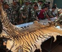 That freezer full of tiger cubs in Thailand isn't the end of the story