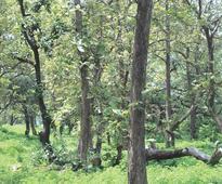 Forest fund Bill failed as it didn't respect tribals: Jairam