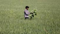 Govt may set up more agri-business management institutes