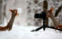 18 Animals That Want to be Photographers