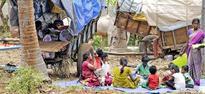 Villagers prefer bullock carts for pilgrimage