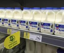 Global dairy glut to persist