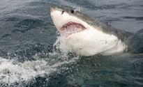 Cape fisherman attacked by Great White