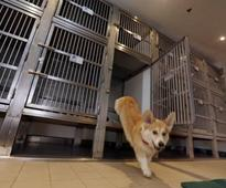 New digs for dogs on Queen Mary 2 cruise ship