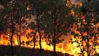 Lit bidis triggered fires that charred hectares of Sariska Tiger Reserve