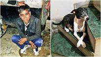 Pet dog foils theft, pins accused to floor
