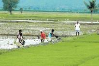 ICAR confers Pandit Deendayal Updhyay award on 12 farmers