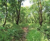 Congress amendment move may block afforestation bill in Rajya Sabha