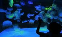 Portland Aquarium Owners Allow All Foster Children Complimentary...