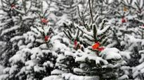 White Christmas odds and forecast for 2016: Will it snow?