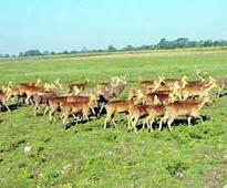 'IInd phase of translocation from KNP to Manas to be over by March 2017'