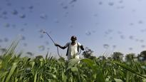 India#39;s UPL explores bid for Platform Specialty agrochem unit: Sources