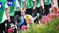 Dog racing falls on wrong side of political track
