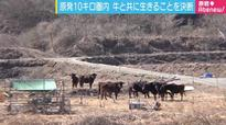Woman Risks Her Life Tending to Abandoned Cattle in Fukushima Radiation Zone