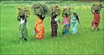 Fertilizer stocks in focus on monsoon hopes