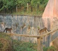 Tripura wildlife sanctuary deemed National Breeding Centre