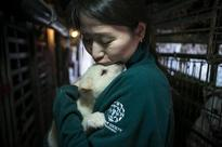 Dozens Of Dogs Rescued From South Korean Meat Farm Arrive In U.S.