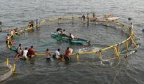 MPEDA, Tata Trusts join hands to help fisheries dependent communities