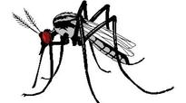 Kerala: Beware, 1 out of 10 fevers is dengue