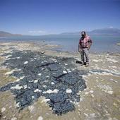Toxic Algae Closes Utah Lake, Sickens 100