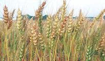 CDRI playing vital role in ensuring food security