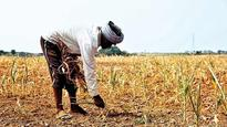 Maha govt takes stock of farmers with heavy loan burden ahead of Modi's visit